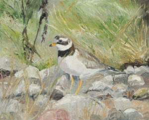 oil painting, great ringed plower